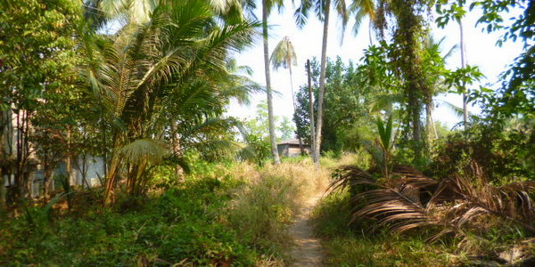 koh-chang-land-for-sale-chanote-title
